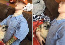 senior dog cuddle dummy