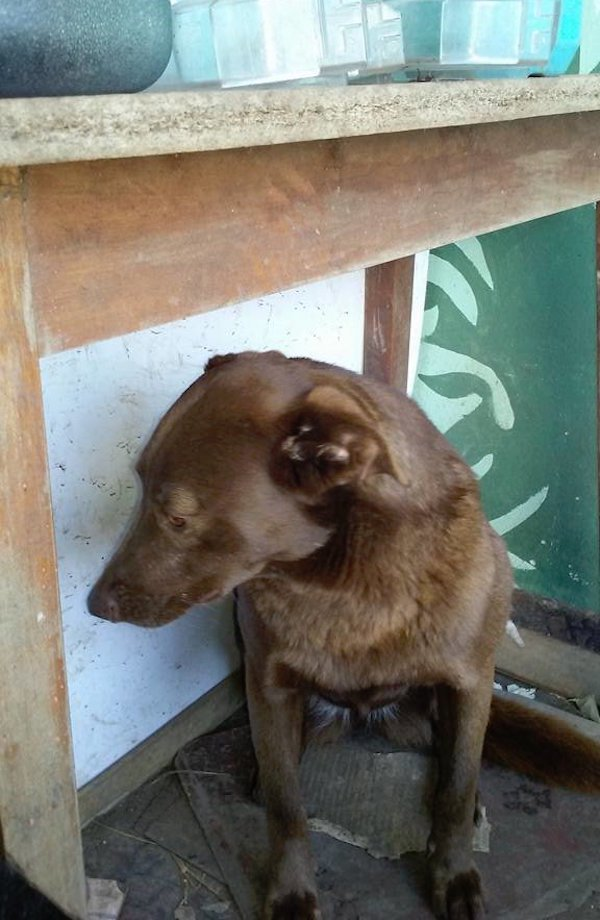 Pakita the dog