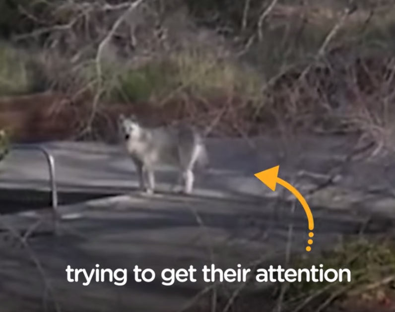 Stray Dogs Approach Teens