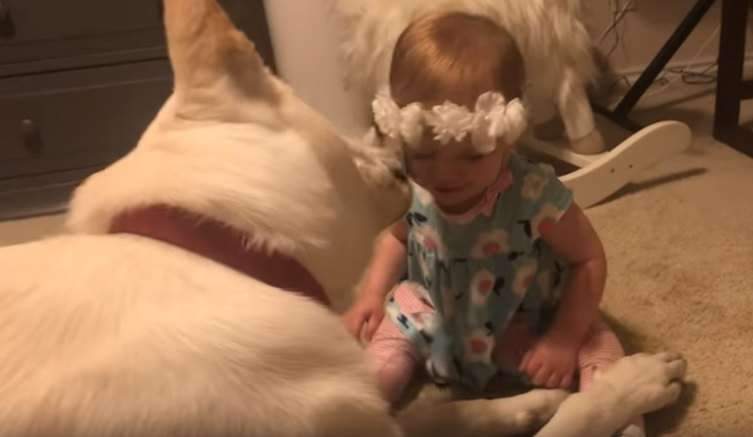 baby and dog sweet love