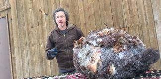 dad killing bigfoot