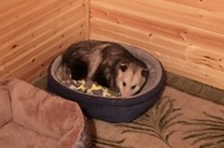 grandma mistaken possum as cat