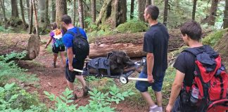 hikers rescue injured dog