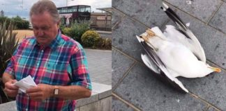 man smashes seagull to death