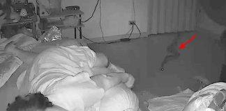 snake bites sleeping woman