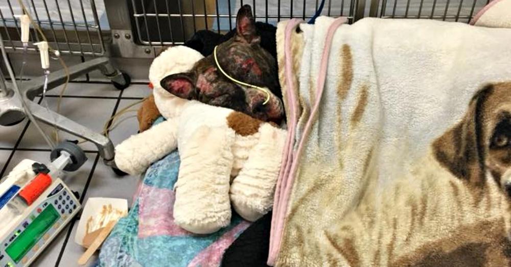 culprit set dog on fire