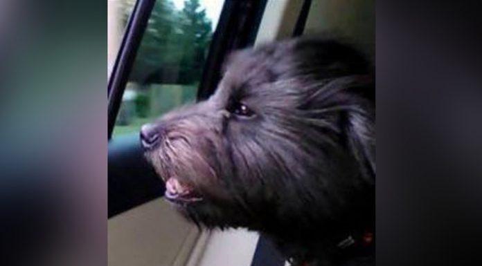 dog groomer kills canine client