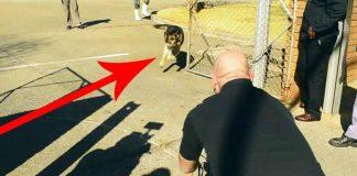 military dog handler 2 years