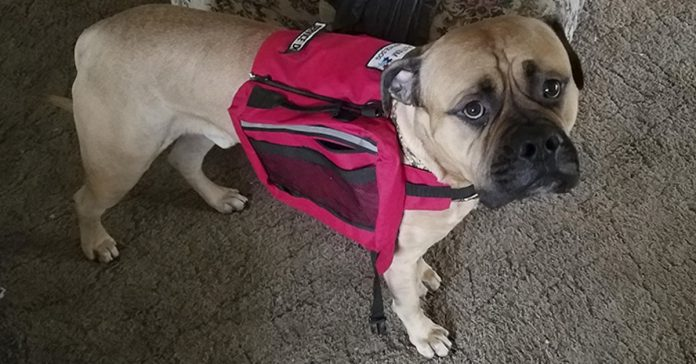 service dog chased away