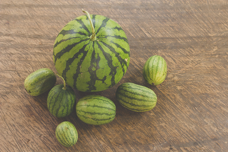 watermelon size