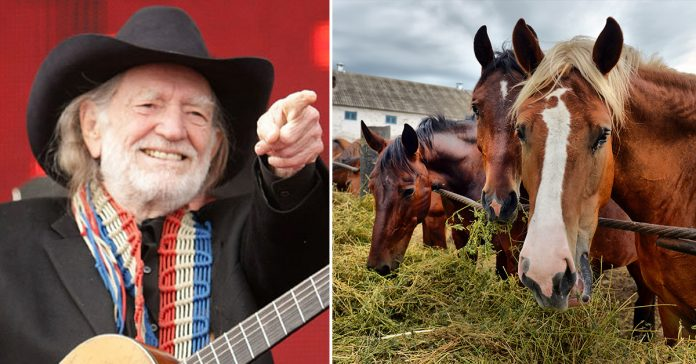 willie nelson rescued 70 horses