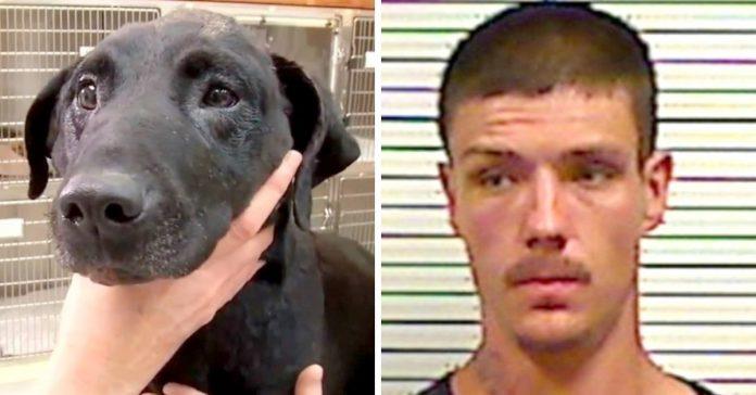 dog dies after being beaten