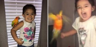 girl pet bird attack on command