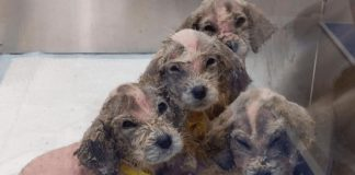 man rescues 6 tiny puppies