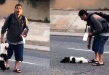 man throws dog 50-feet