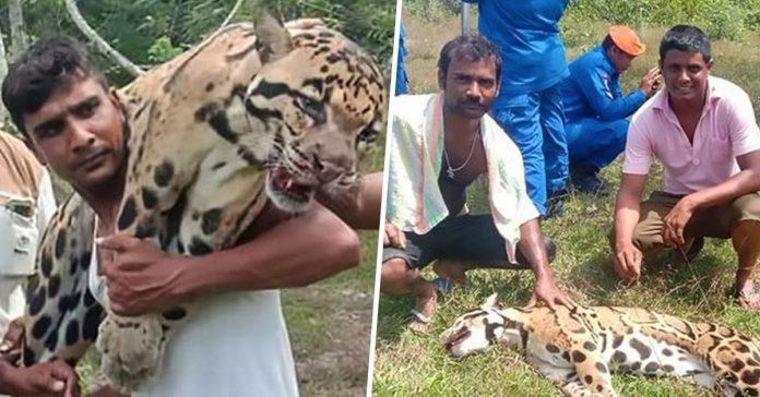 poachers smile and laugh leopard