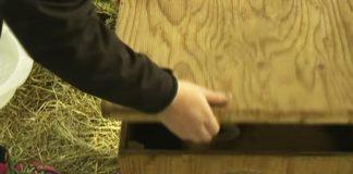 wooden chest unique animal